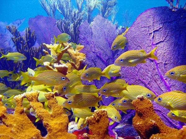One mile off the southern shore of Grand Bahama Island, the shallow bars and coral reefs at Peterson Cay National Park, one of the smallest national parks in the Bahamas, are among the best for catching a glimpse of sea fans, barracuda and manta rays that flit among the purple and yellow coral.