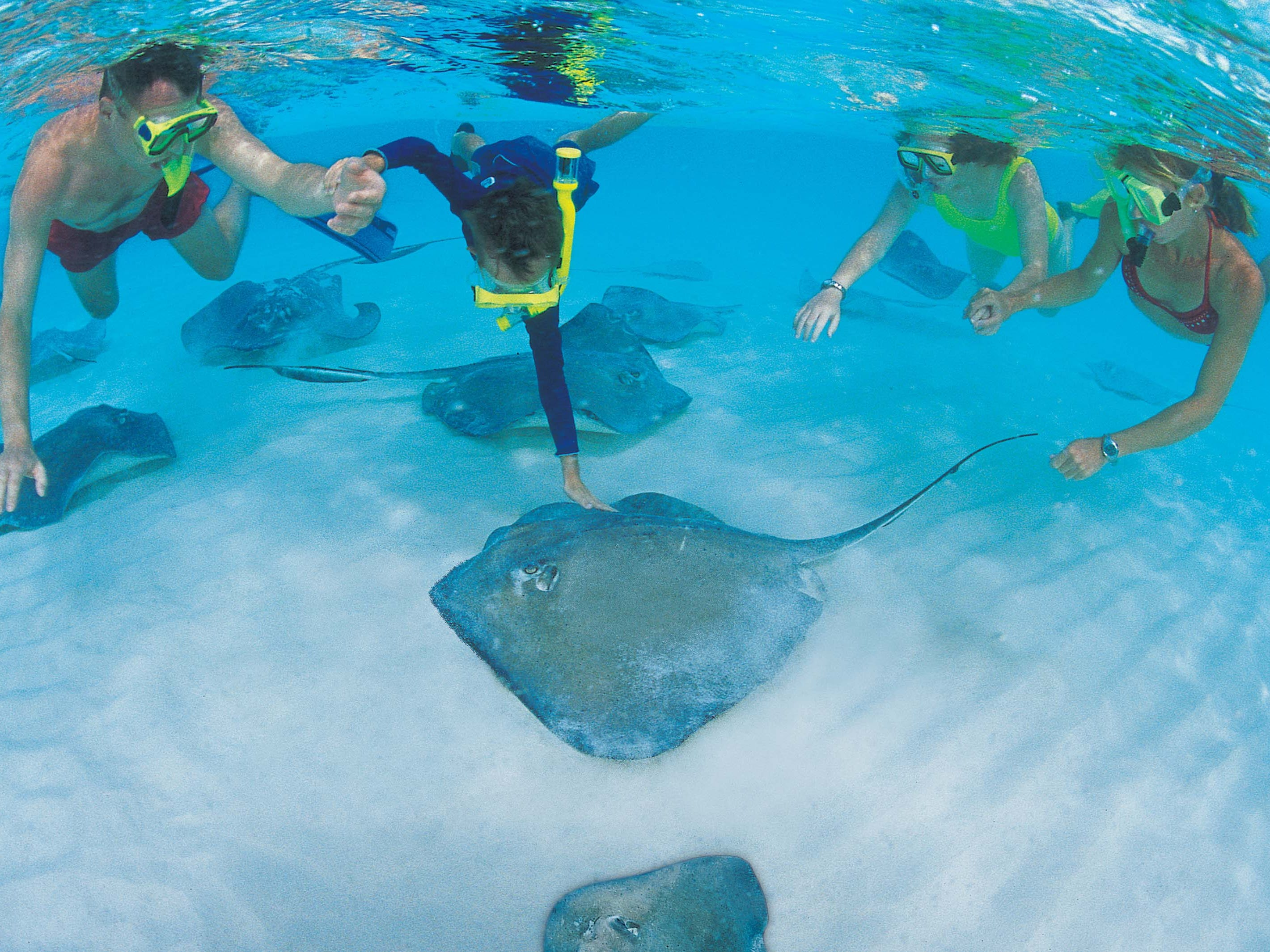 Crazy busy with tourists but worth a visit, Stingray City in Grand Cayman is easy snorkeling along a shallow sandbar.