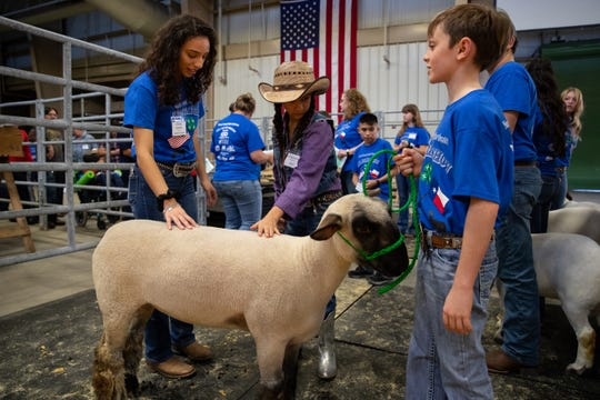 Ava Hernandez waits to exhibit a lamb as she and other third- to 12th-grade special-needs students show goats and lambs at the Nueces County Junior Livestock Show at the Richard M. Borchard Regional Fairgrounds in Robstown on Saturday, Jan. 12, 2019.