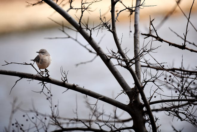 A bird sits in a tree in a North Jersey park just before the turn of the new year, Saturday Dec. 29, 2018.