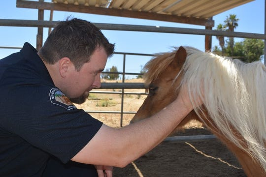 Animal Services Officer Chris Peck checks on a miniature horse in May 2017.