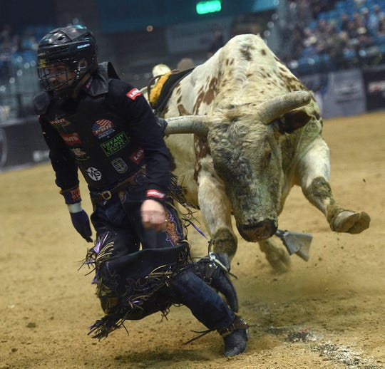 Chase Robbins gets chased after getting bucked off during the PBR Velocity Tour at the Reno Events Center on Jan. 11, 2019.
