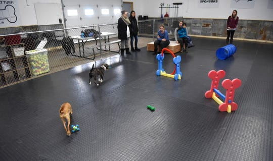 Arthur and Violet enjoy some play time together Saturday, Jan. 11, at the Grey Face Rescue indoor dog park.