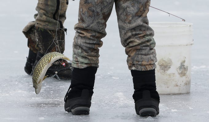 A northern pike flops on the ice after being caught on Saturday, January 12, 2019, during the Rosholt Blizzard Busters Fisheree at Lake Helen outside Rosholt, Wis.Tork Mason/USA TODAY NETWORK-Wisconsin
