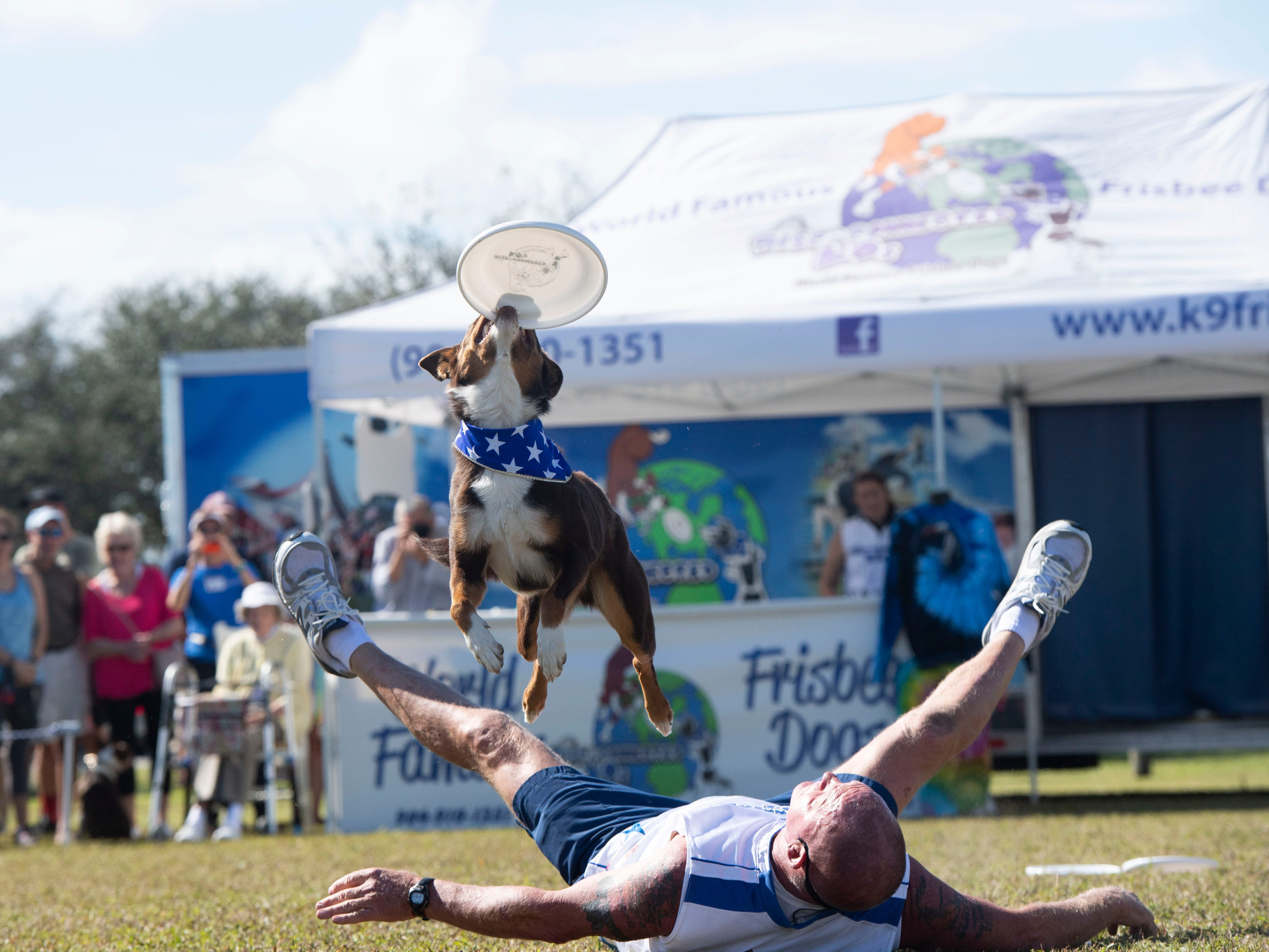 "Disc-Connected K9's trainer Lawrence Frederick and Galaxy Girl perform frisbee tricks to a delighted audience Saturday, Jan. 12, 2019, during the Humane Society of Vero Beach and Indian River County's sixth annual Bark in the Park at Riverside Park in Vero Beach. Hundreds of people and their dogs came to the event that featured the frisbee acts, the Ultimate Dock Diving Dogs, a kids zone, lure curse, the Humane Society's Mobile Adoption Unit and vendors. ""The purpose of Bark in the Park is to bring the community's pet lovers together and to celebrate the human, animal bond,"" said Kate Meghji, executive director of the Humane Society. ""Watching dogs be dogs is pretty much the most entertaining and heartwarming thing ever,"" she said."