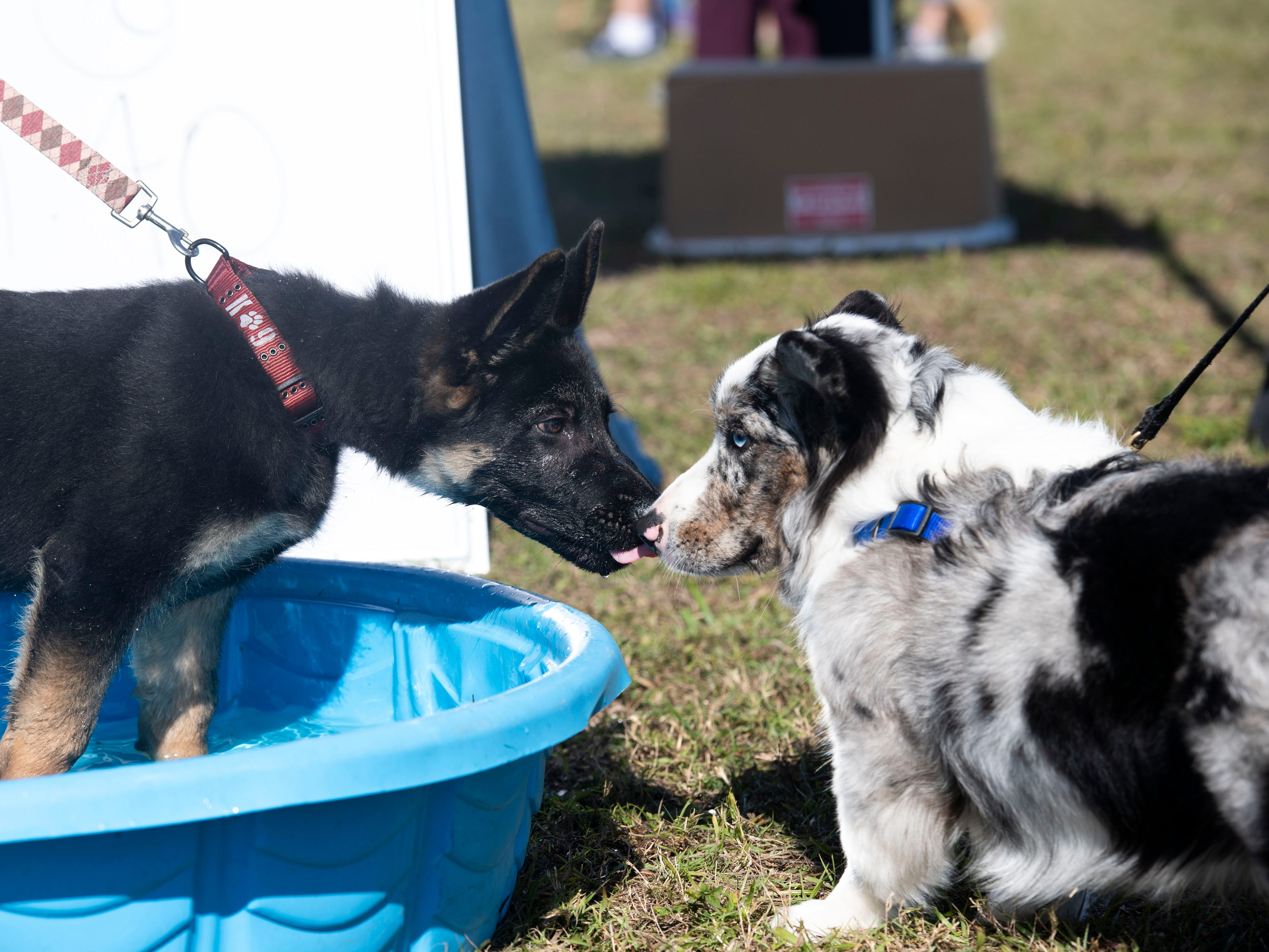 "Ceaser (left), 3 months, and Bode, 8 months, share a kiss during the Humane Society of Vero Beach and Indian River County's sixth annual Bark in the Park that featured the Disc-Connected K9's frisbee acts, the Ultimate Dock Diving Dogs, a kids zone, lure curse, the Humane Society's Mobile Adoption Unit and vendors on Saturday, Jan. 12, 2019, at Riverside Park in Vero Beach. ""The purpose of Bark in the Park is to bring the community's pet lovers together and to celebrate the human, animal bond,"" said Kate Meghji, executive director of the Humane Society. ""Watching dogs be dogs is pretty much the most entertaining and heartwarming thing ever,"" she said."