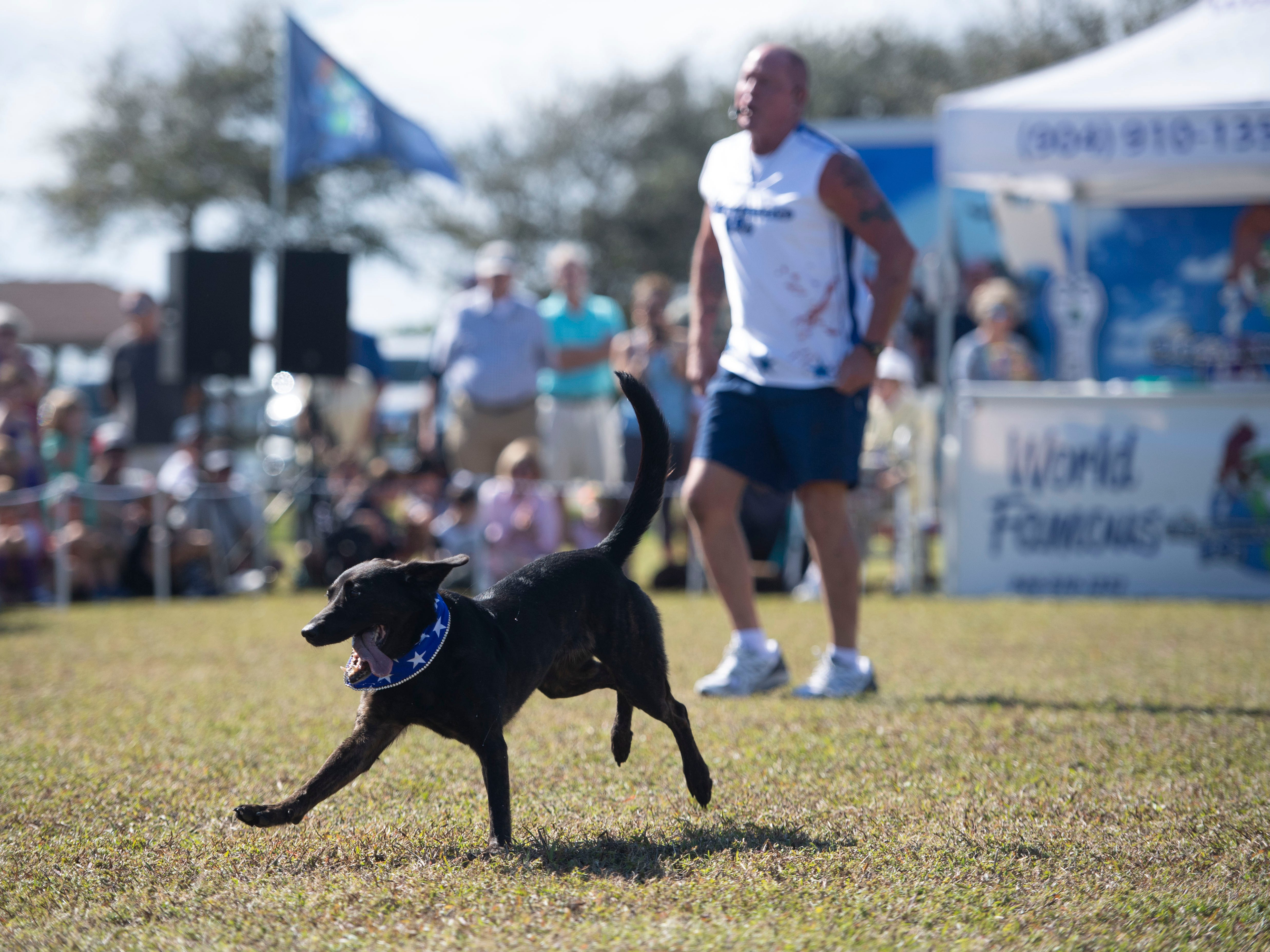 "Disc-Connected K9's trainer Lawrence Frederick and Coppertop perform frisbee tricks to a delighted audience Saturday, Jan. 12, 2019, during the Humane Society of Vero Beach and Indian River County's sixth annual Bark in the Park at Riverside Park in Vero Beach. Hundreds of people and their dogs came to the event that featured the frisbee acts, the Ultimate Dock Diving Dogs, a kids zone, lure curse, the Humane Society's Mobile Adoption Unit and vendors. ""The purpose of Bark in the Park is to bring the community's pet lovers together and to celebrate the human, animal bond,"" said Kate Meghji, executive director of the Humane Society. ""Watching dogs be dogs is pretty much the most entertaining and heartwarming thing ever,"" she said."