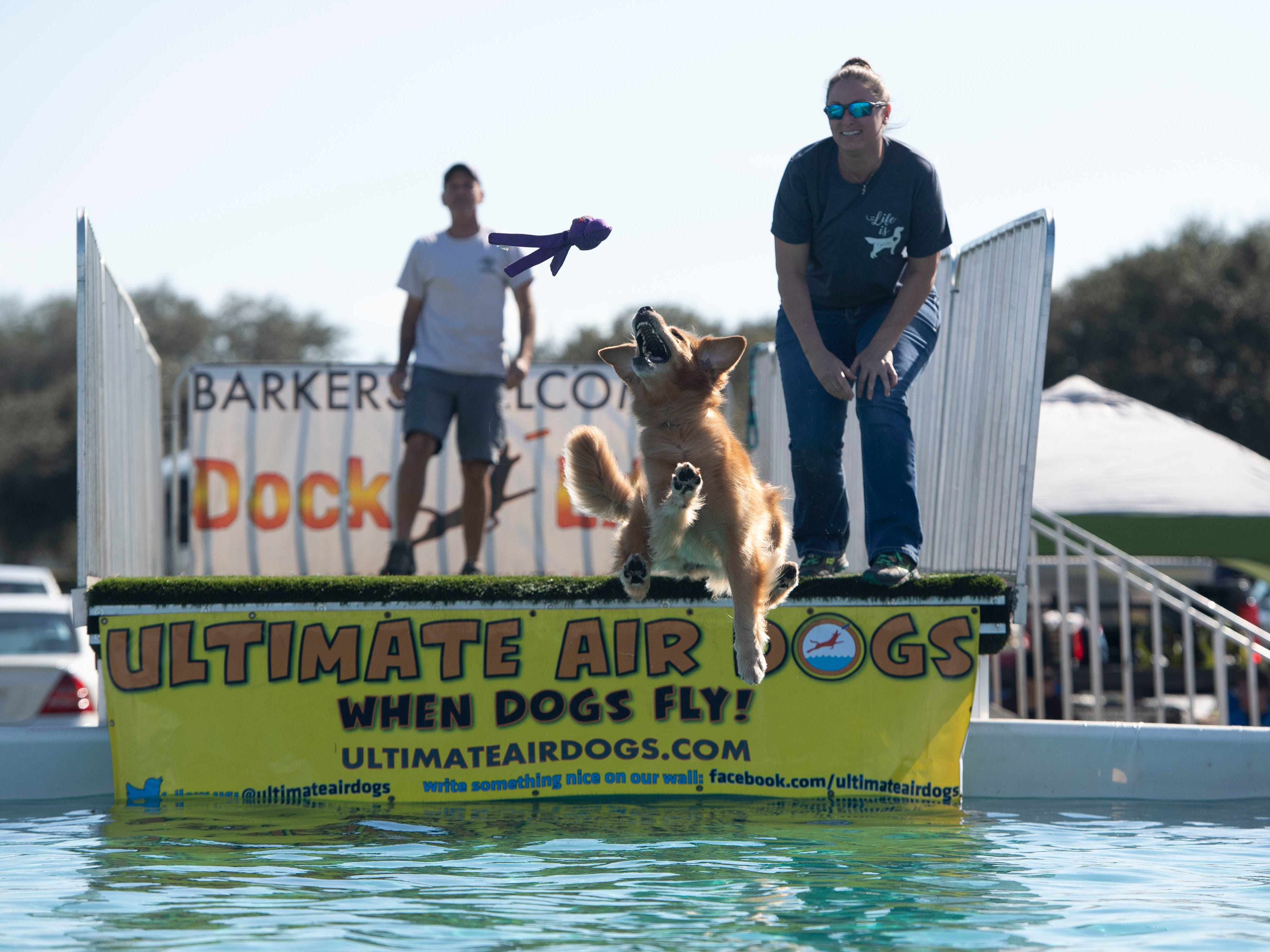 "Rodeo, a 6-year-old golden retriever, practices her jumps at the Humane Society of Vero Beach and Indian River County's 6th annual Bark in the Park that featured the Disc-Connected K9's frisbee acts, the Ultimate Dock Diving Dogs, a kids zone, lure curse, the Humane Society's Mobile Adoption Unit and vendors on Saturday, Jan. 12, 2019, at Riverside Park in Vero Beach. ""The purpose of Bark in the Park is to bring the community's pet lovers together and to celebrate the human, animal bond,"" said Kate Meghji, executive director of the Humane Society. ""Watching dogs be dogs is pretty much the most entertaining and heartwarming thing ever,"" she said."