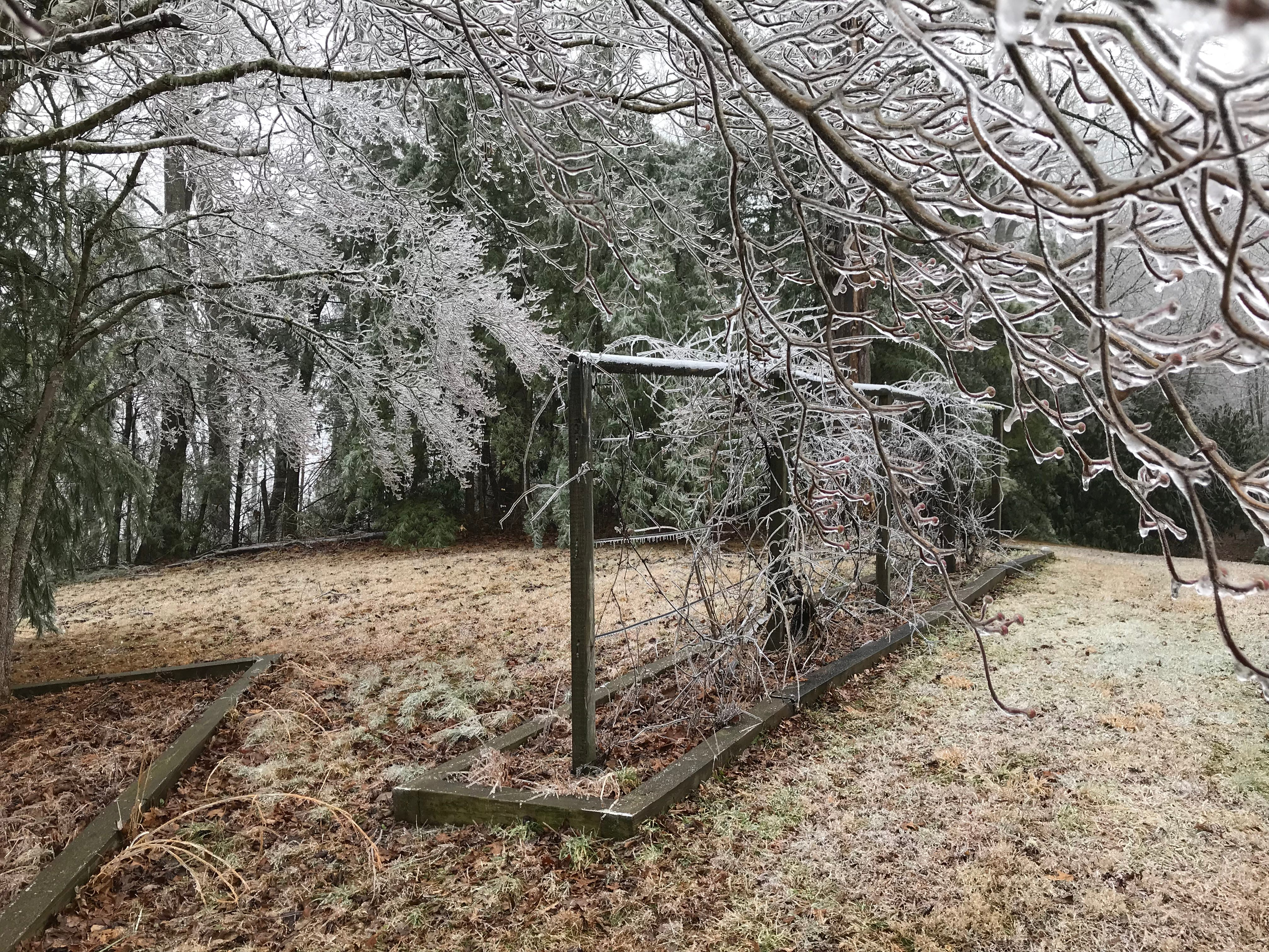 A reader in Fairview shared these photos of his property from Sunday morning, after the Saturday night ice storm in Western North Carolina.