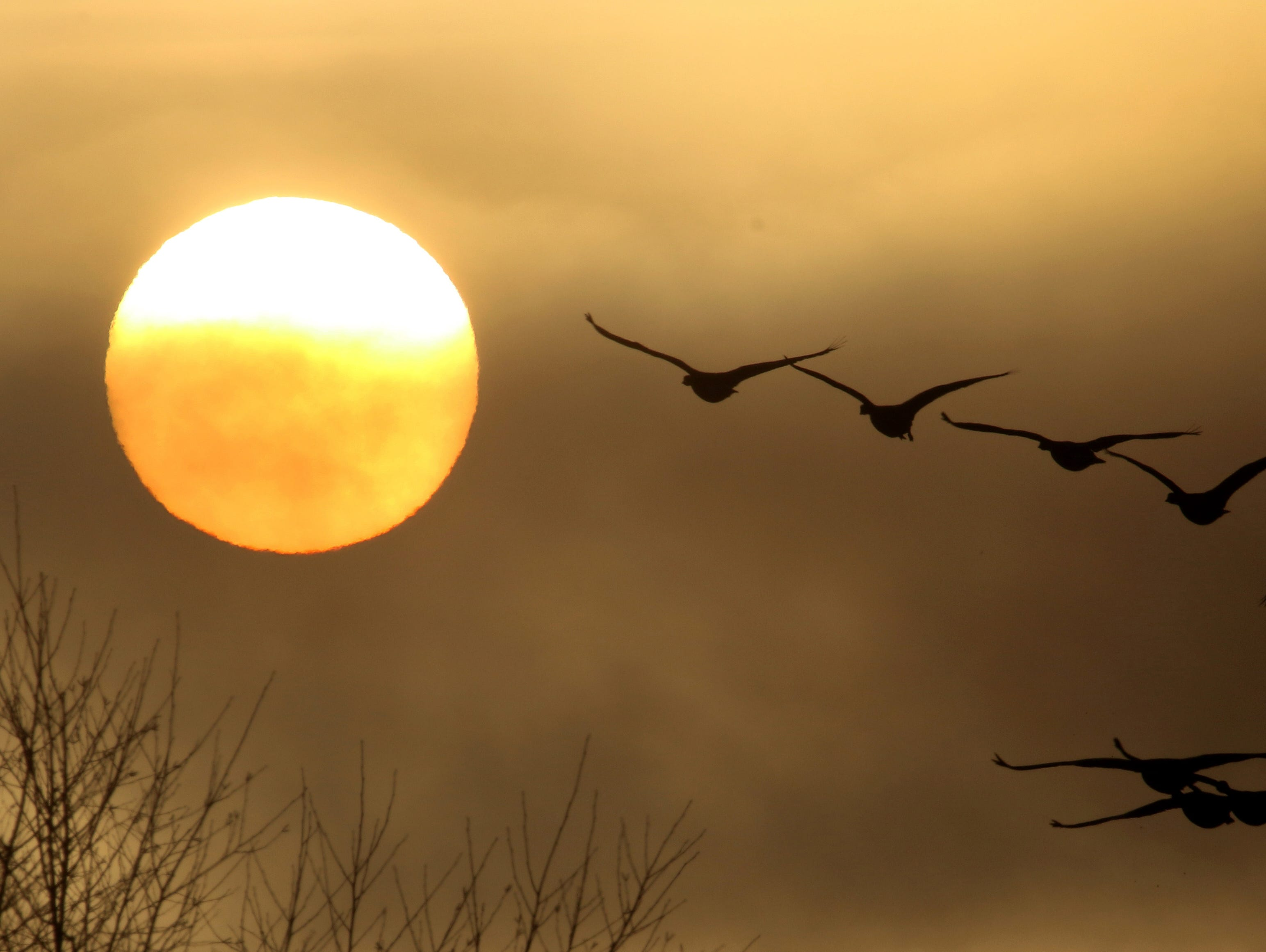A flock of geese flies over Lions Park in Bremerton as the sun breaks through the fog just after sunrise  on Sunday, January, 13, 2019.