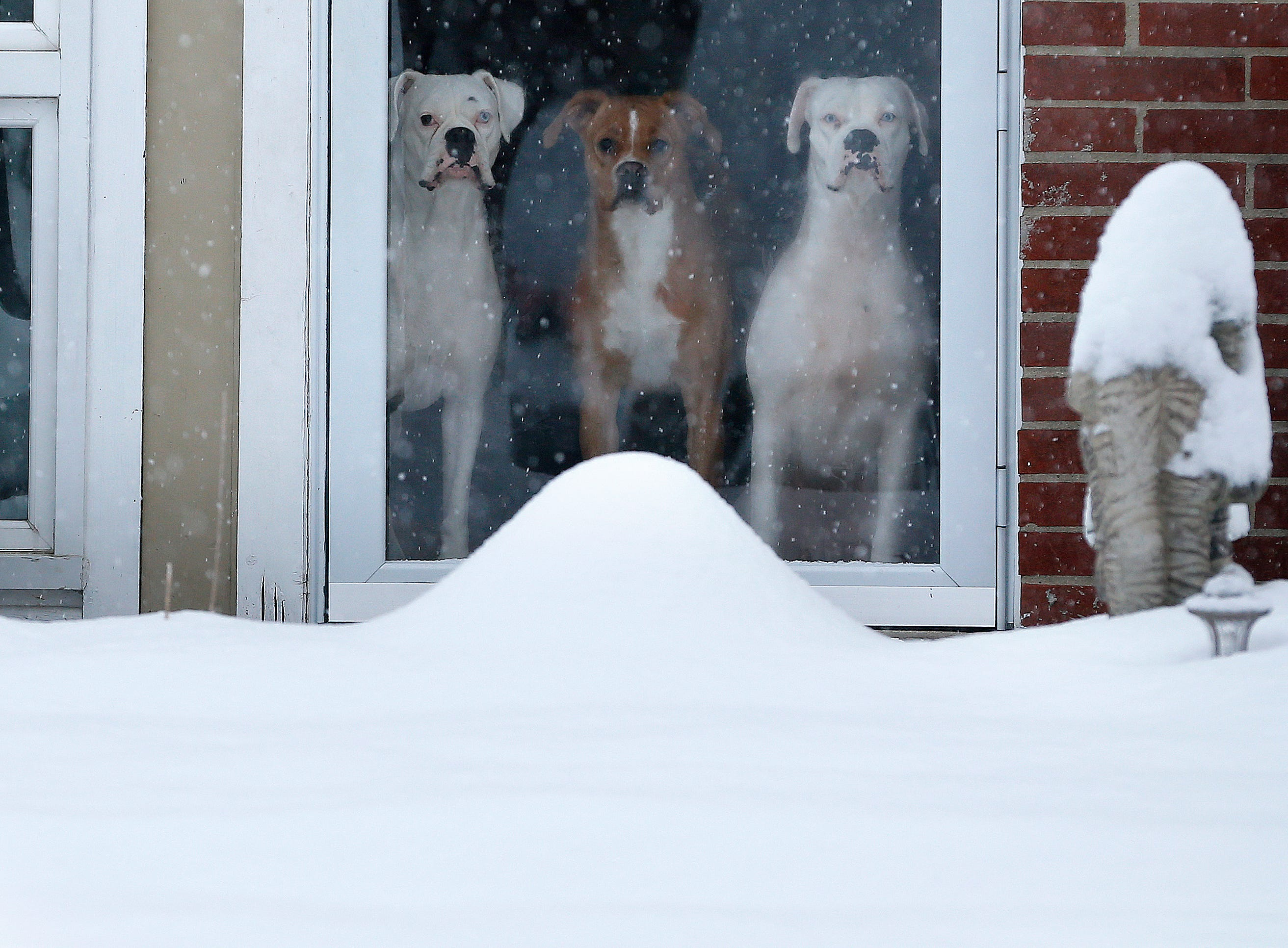 Three dogs look out at the snow from their Forest Park home on Sunday January 13, 2019.  Four inches of snow has fallen in the northern suburbs of Cincinnati, as snow continues to fall.