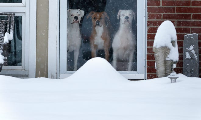 Three dogs look out at a January snow from their Forest  Park home.