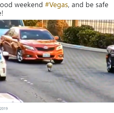 Why did the goose cross the road? Goose interrupts traffic on Vegas Strip