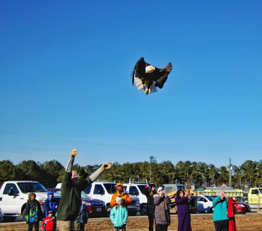 An eagle that has recovered from injuries sustained in October 2018 takes to the air after being released at Tall Pines Harbor Campground near Temperanceville, Virginia on Friday, Jan. 11, 2019.