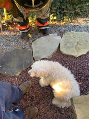 Dog rescued by the Peapack Gladstone Fire Department after becoming wedged between the foundation of a home and brick planter.