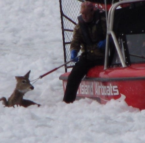 DNR rescues Door County deer after she fell through ice on Green Bay near Little Harbor