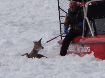 A Fish Creek man gets a call from DNR to use one of the boats his company makes to rescue a deer near Sturgeon Bay.