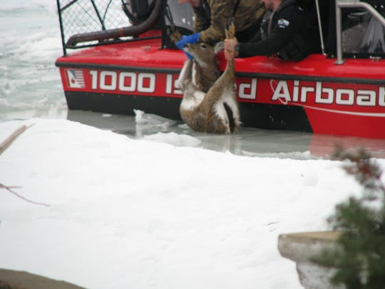DNR wardens pull exhausted deer onto rescue boat in Little Harbor, Door County, Jan. 10, 2019