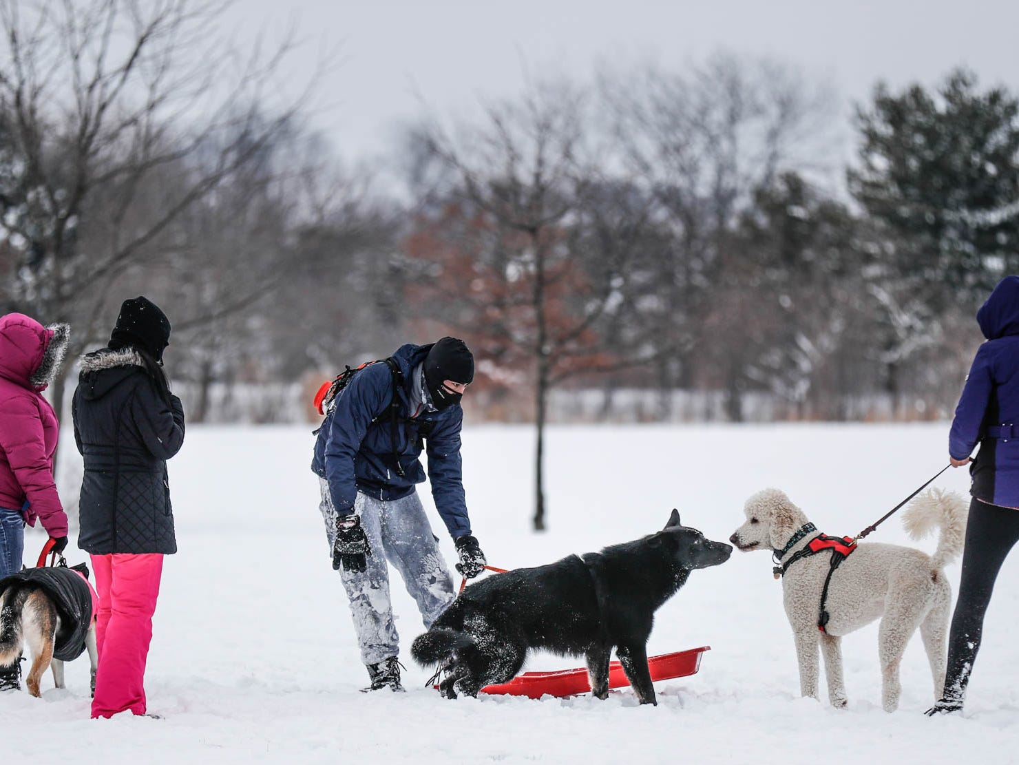 Dogs take a moment to greet each other near the sledding hill at West Park in Carmel Ind. on Sunday, Jan. 13, 2019.