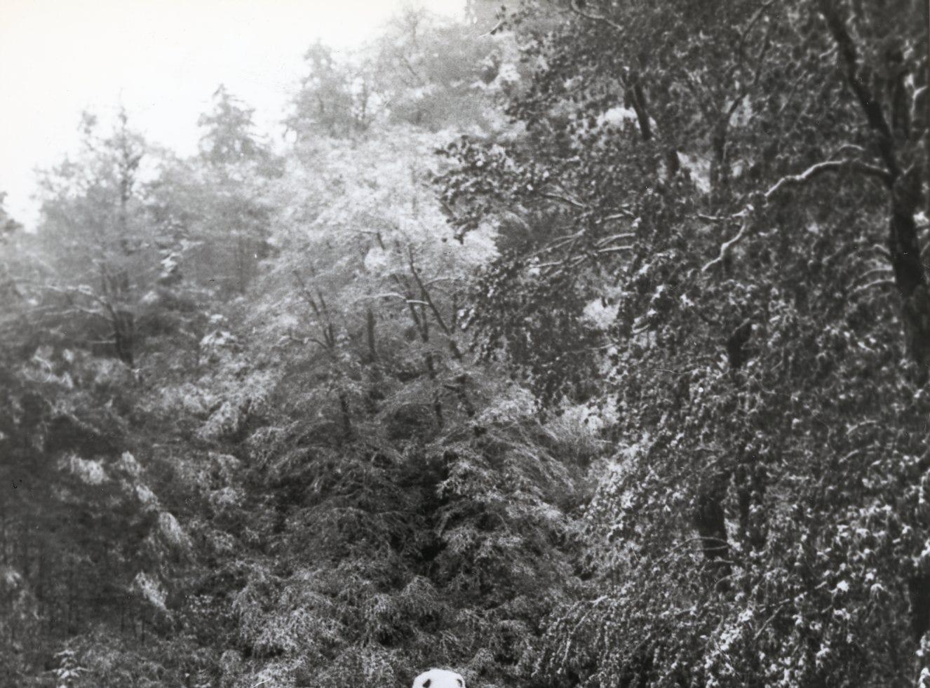 Snow in the Great Smokey Mountains, May, 1979.