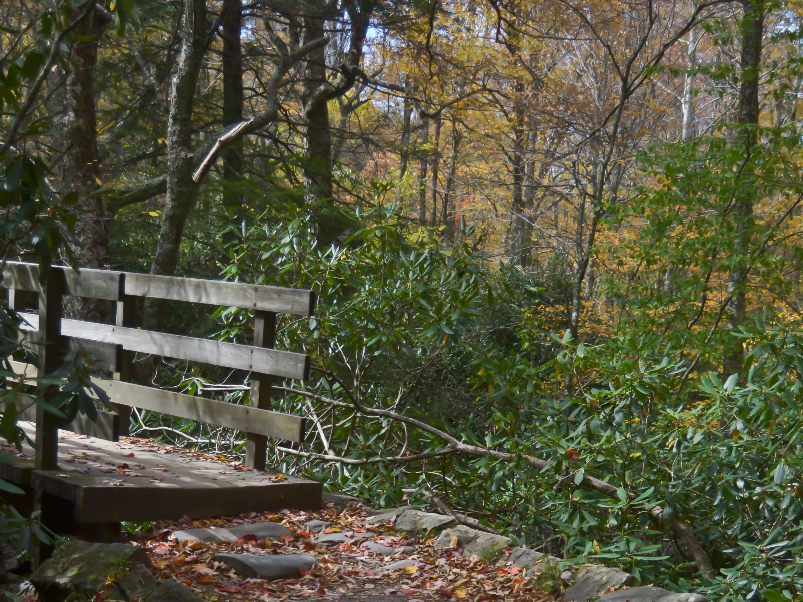 A beautiful October afternoon in the Great Smokey Mountains National Park, 2011.