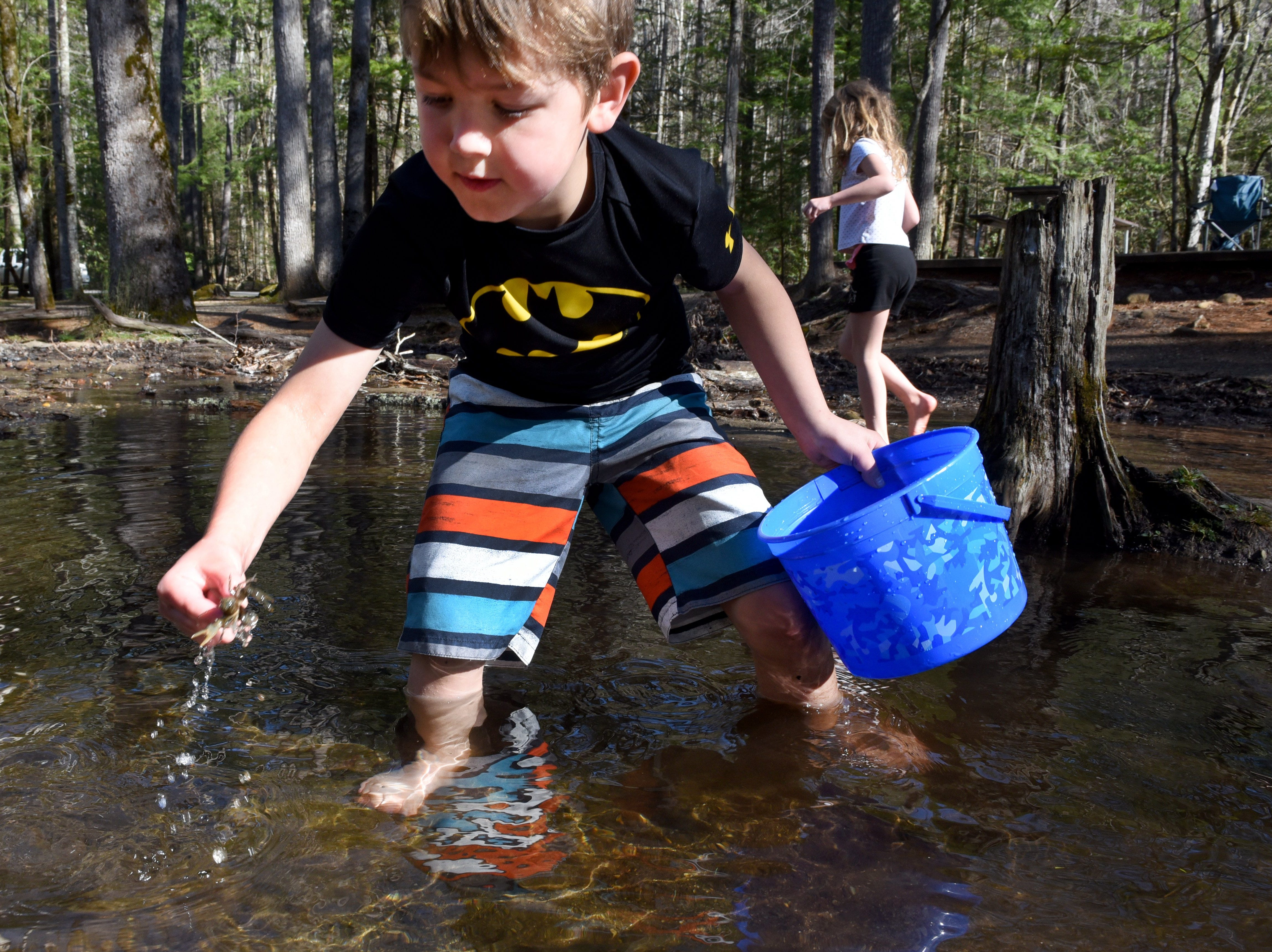 Parker Tallent, 7, catches a crawfish in the creek at the Cades Cove picnic area Tuesday, Mar. 15, 2016 while playing with his siblings. The Tallents are from Sevierville and visiting for a spring break picnic.   (MICHAEL PATRICK/NEWS SENTINEL)