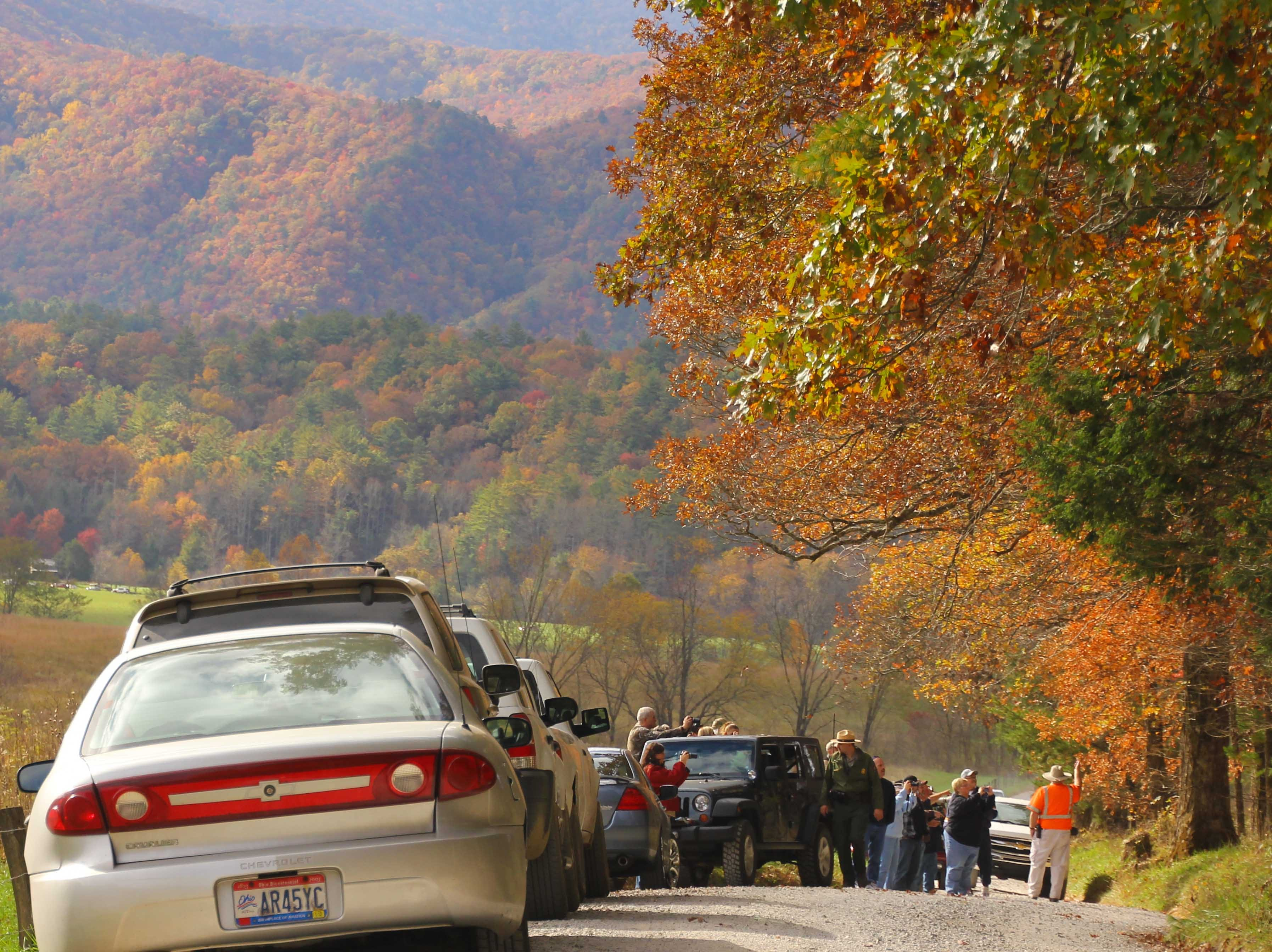Visitors stop along the road in Cades Cove to view a bear in October 2012 in the Great Smoky Mountains National Park. The park recorded 650,180 vehicles on the Cades Cove Loop in 2012 according to spokeswoman Molly Schroer.  (Warren Bielenberg/Special to the News Sentinel)