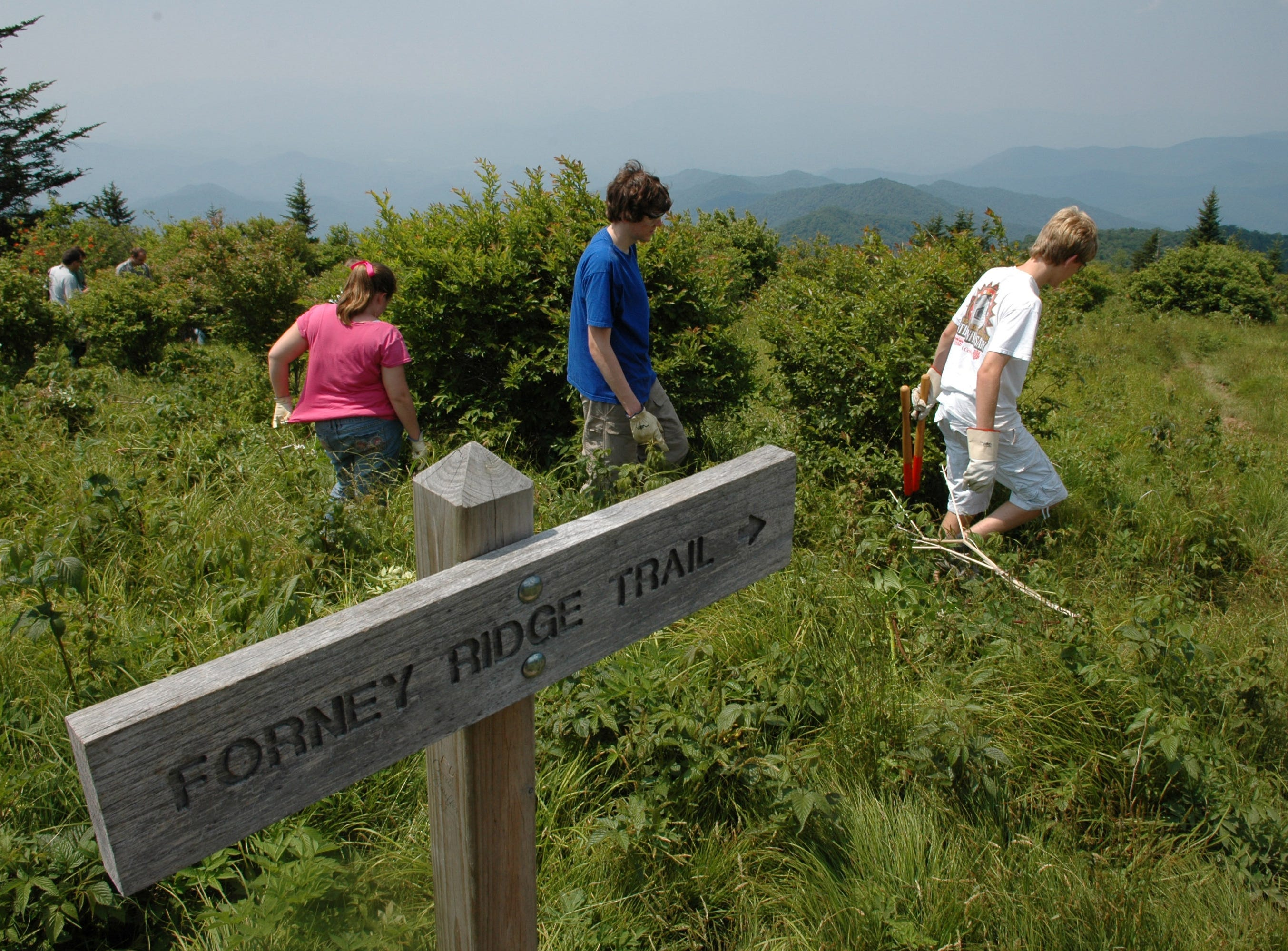 Great Smoky Mountains Institute at Tremont students, from left, Rebecca McCoy, 12, Eric Weigel, 15, and Taylor Rinehart, 16, work on removing plants from on top of Andrews Bald near Clingmans Dome in the Great Smoky Mountains National Park Thursday afternoon. Jeff Adkins/NEWS SENTINEL ----06/22/2006.