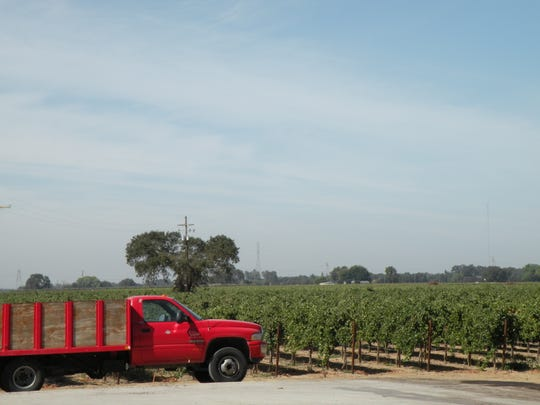 Newly planted vines at Oak Farm Vineyards are part of the trend that has transformed Lodi, California, into a fine wine destination.