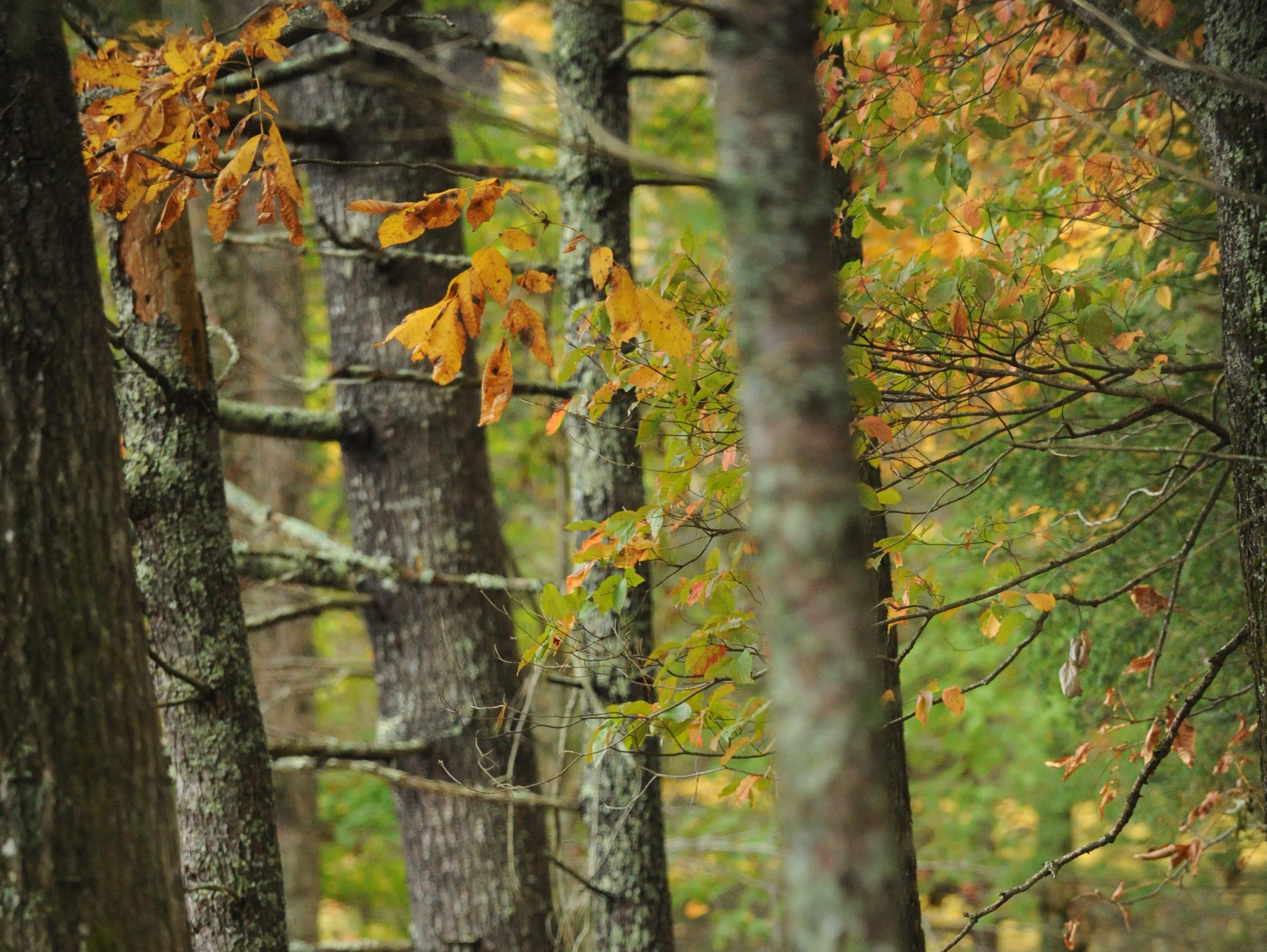 A photo for the Book of Lists cover shot in Cades Cove in the Great Smoky Mountains National Park Thursday, Oct. 20, 2011.  (ADAM BRIMER/NEWS SENTINEL)