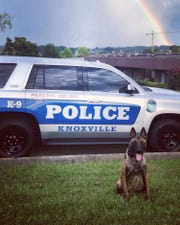 """KPD's newest Officer, """"Kondy"""" is ready to sniff out crime."""