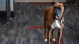 PetFirst is 15 years old and growing rapidly in the pet insurance industry. The Jeffersonville, Indiana, company has tens of thousands of customers.