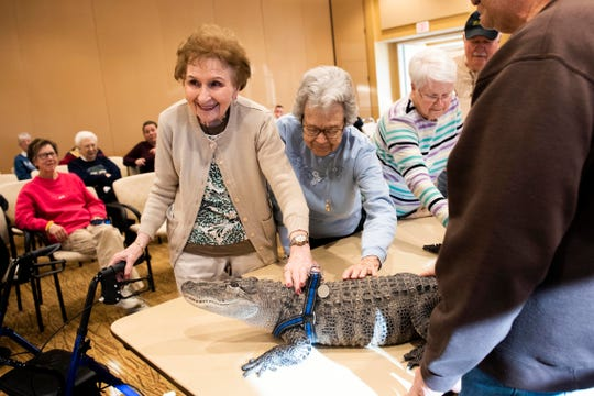 Gloria Watson, left, and Alice Brown pet Wally, a 4-foot-long emotional support alligator, at the SpiriTrust Lutheran Village at Sprenkle Drive, Monday, Jan. 14, 2019.