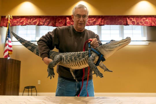 Joie Henney, of Strinestown, lifts his emotional support animal, Wally, an alligator, up on a table to give a presentation at the SpiriTrust Lutheran Village at Sprenkle Drive, Monday, Jan. 14, 2019. Henney has had Wally for nearly the gator's whole life, almost four years. Wally stays inside Henney's house and eats raw, dead, chicken.