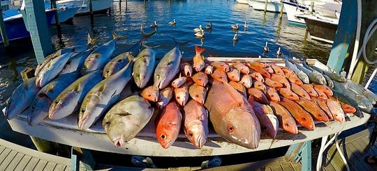 A full fish box was the reward for anglers fishing Sunday aboard the Safari I party boat out of Pirates Cove Resort in Port Salerno.