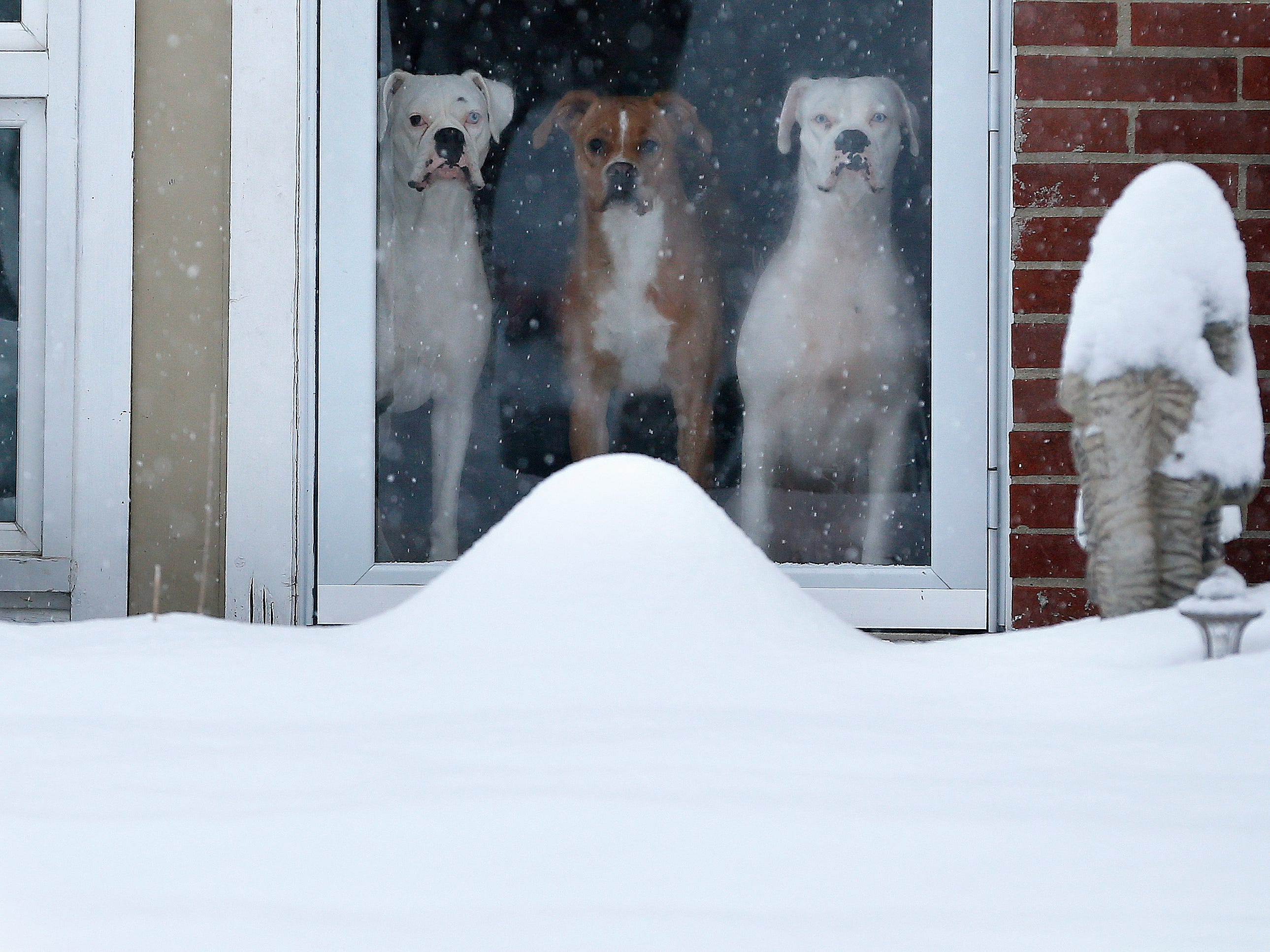 Three dogs look out at the snow from their Forest Park home Sunday January 13, 2019. Snow overnight and this morning brought a new layer of snow and is resulting in closings and delays. The National Weather Service at Wilmington said the winter storm warning is in effect for portions of Southeast Indiana, Northern Kentucky and South Central and Southwest Ohio. (Via OlyDrop)