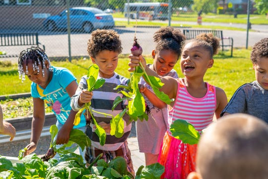 """Students at Vision Preparatory Charter School harvest the produce they grew in the school's Big Green Memphis learning garden. Big Green Memphis is a nonprofit that has put over 120 learning gardens in schools across Memphis, with the goal of teaching kids about """"real food."""""""