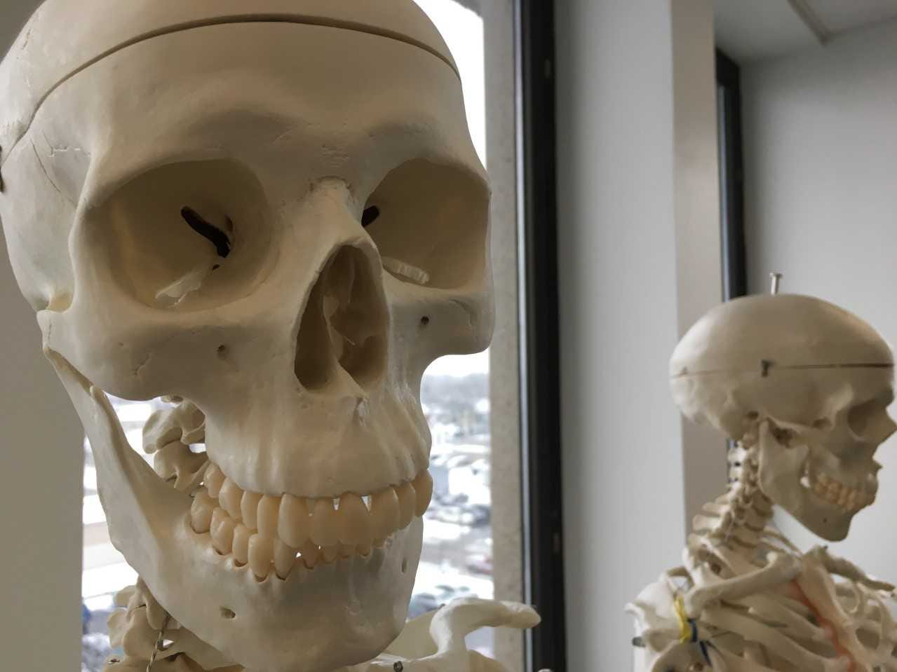 Skeletons stand in a therapy lab at Ivy Tech Community College in Muncie.