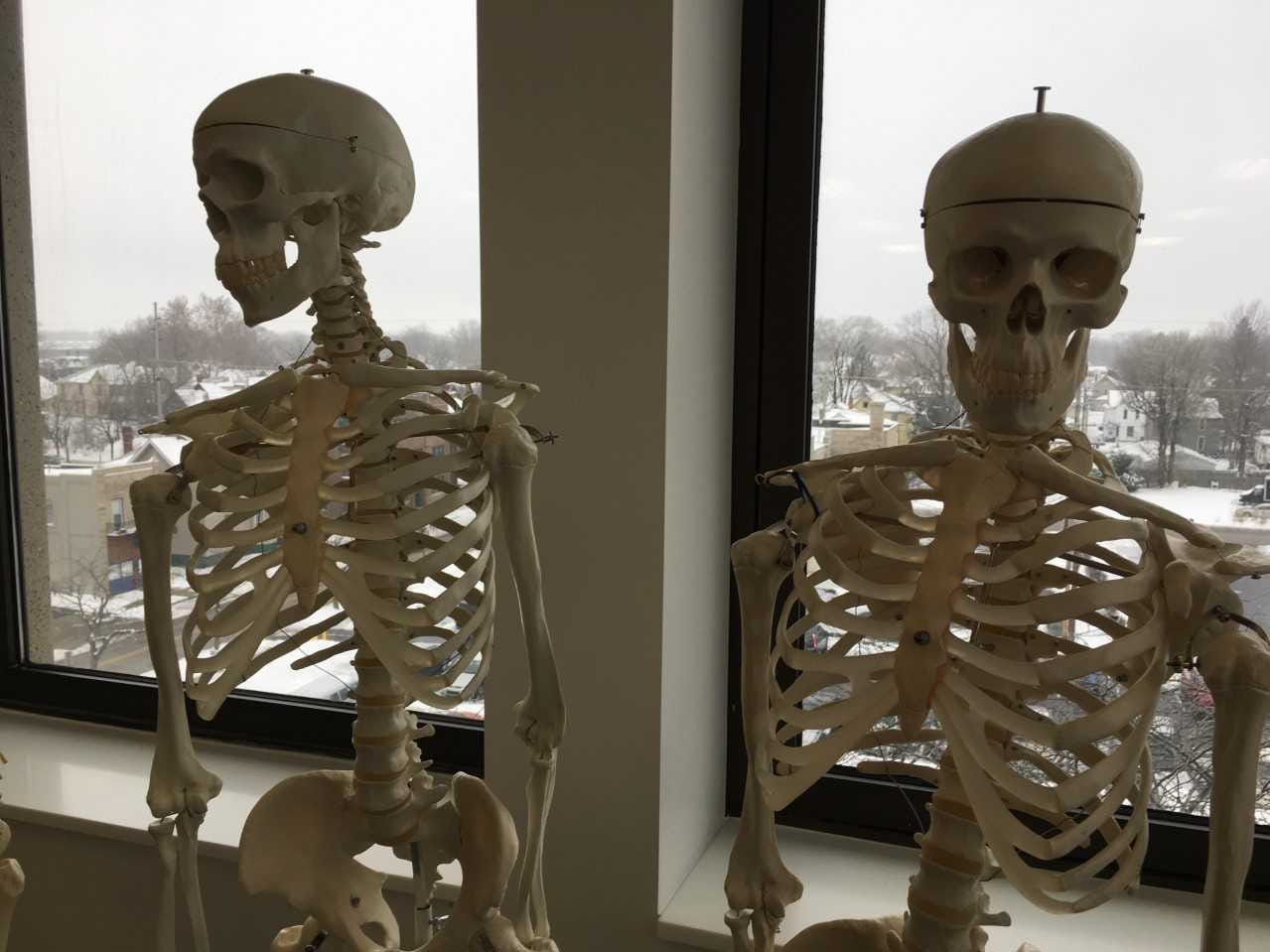 Skeletons help teach Ivy Tech health sciences students at new facilities in downtown Muncie.