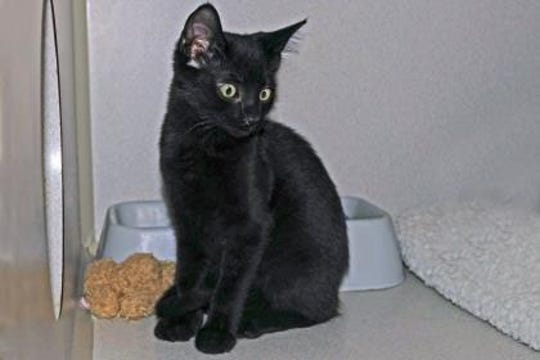 Kip is an 8-month-old kitty who loves to explore and play.