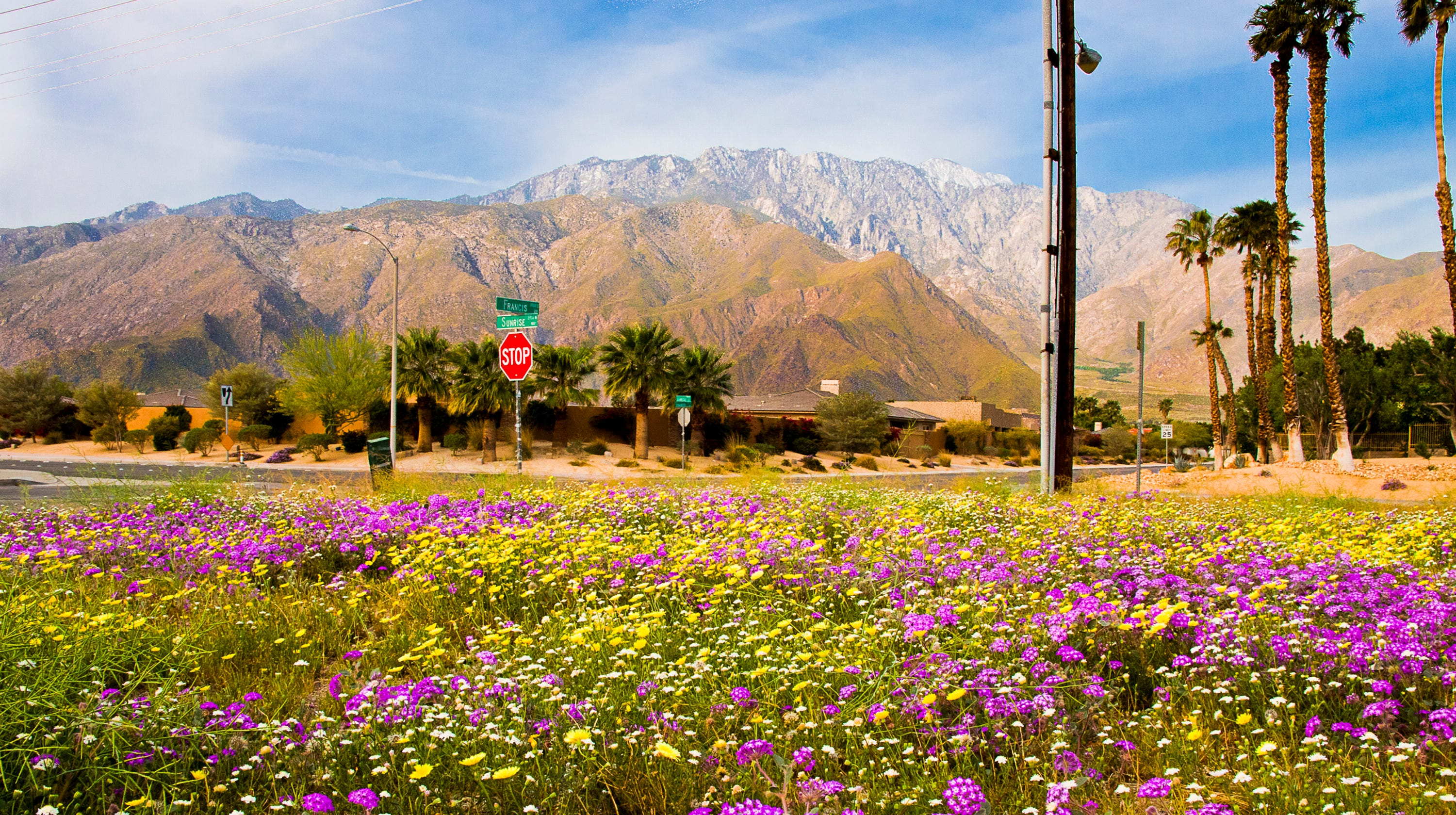 Heres How Palm Springs Areas Recent Rain Will Affect Wildflowers