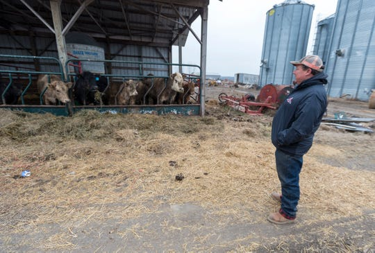 Michael Pratt looks towards some of his farm's cows Tuesday, Jan. 15, 2019 on his farm in Allenton.