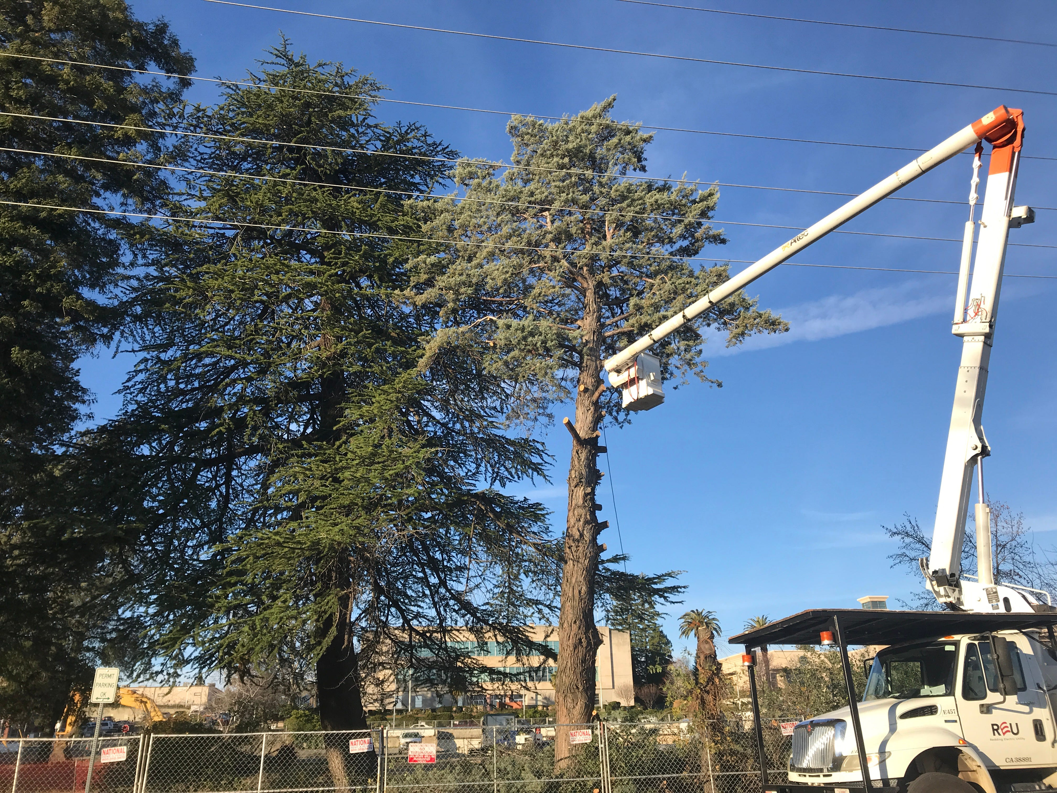 REU crews on Monday chopped down three trees to make room for the new Shasta County Courthouse in downtown Redding.