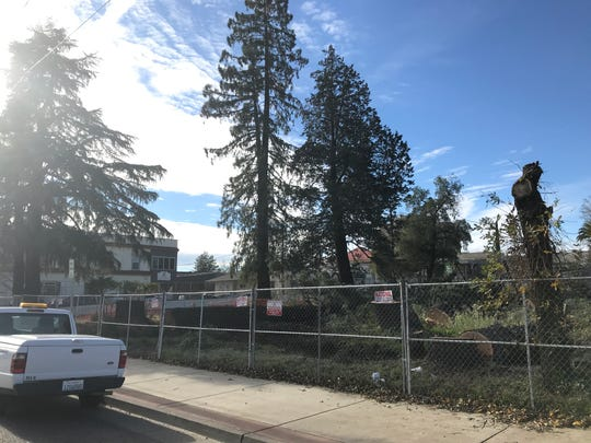 The corner of Yuba and Oregon streets after REU removed three trees, including a large redwood and cedar, to make room for the new Shasta County Courthouse.