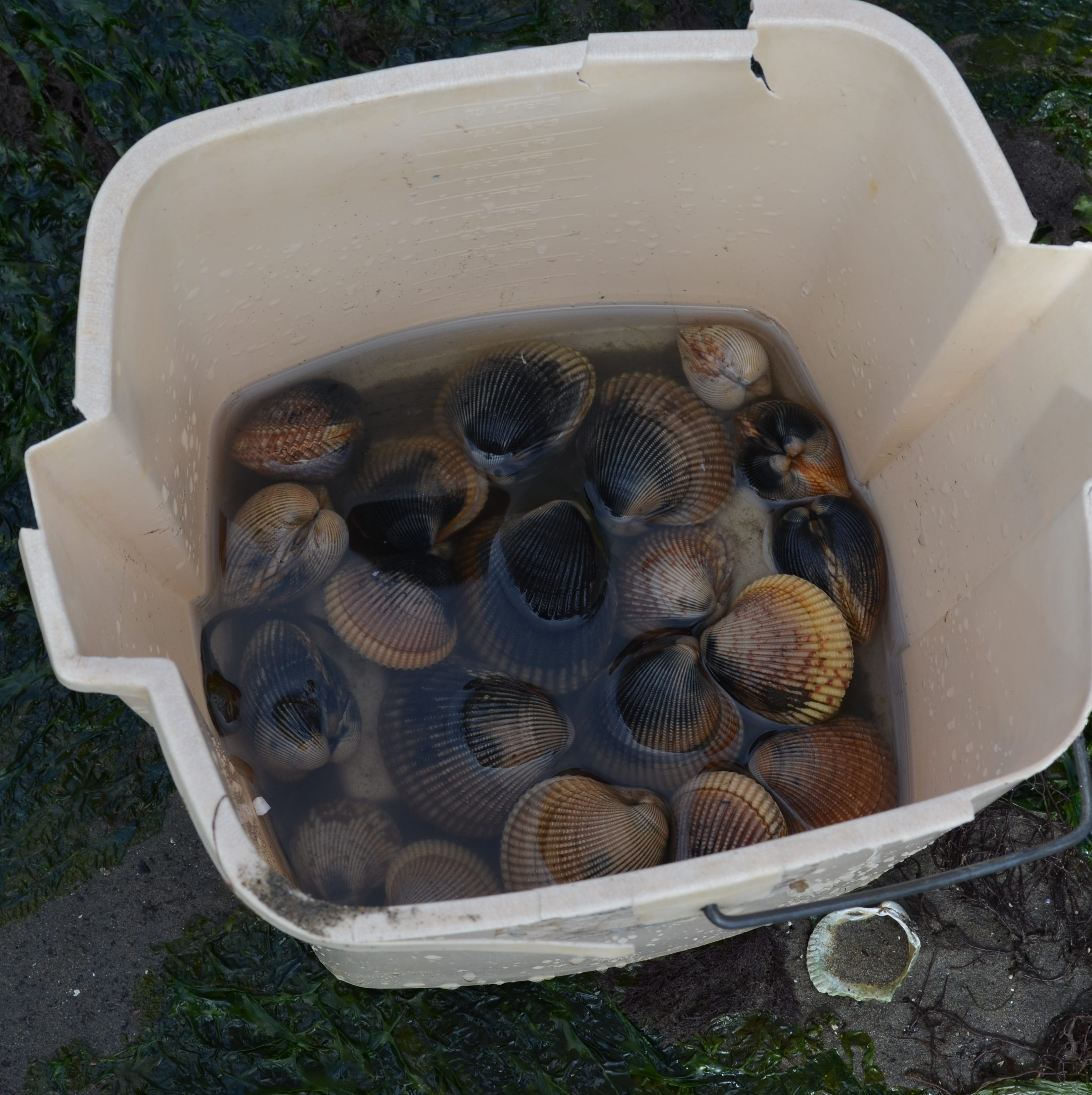 Henry Miller's last word on clamming, until the next time