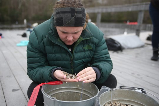 Aucilla Research Institute Lab Manager Bridgett Borders combs through shells and other debris from the bottom of Wakulla Springs as researchers there observe the remains of a mastodon Monday, Jan. 14, 2019.