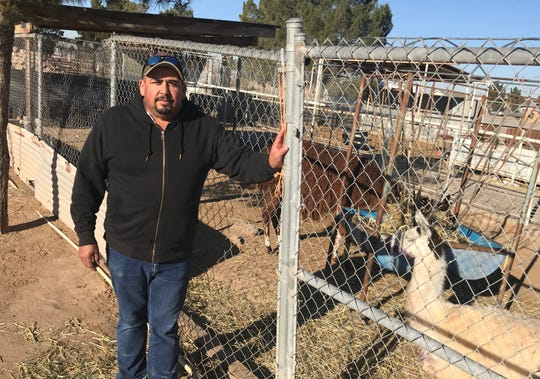 Eugenio Licon stands outside the pen of the llama that was attacked by two dogs Monday morning.