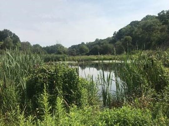 The 36 acres in Lewisboro preserved by the Westchester Lands Trust include a 33-acre parcel near Route 123 that includes a segment of the Mill River.