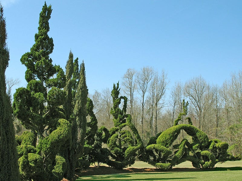 Pearl Fryar Topiary Garden, Bishopville, South Carolina: In the 1980s, Pearl Fryar planted topiaries discarded by a local nursery on his 2-acre lawn in Bishopville, trimming them into unique shapes. Today, the self-taught horticulturalist's garden is recognized all over the country.