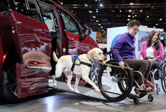 Mork, a companion dog for Wallis Brozman a spokesperson for Canine Companions for Independence, demonstrates how Mork provides assistance with getting her wheelchair in and out of  the Chrysler Pacifica / Braun Automobility van on Feb. 9, 2017, at the Chicago Auto Show. Chrysler Automobility partnered with Braun and Canine Companions for Independence to showcase the adaptive equipment created exclusively to suit drivers with disabilities.